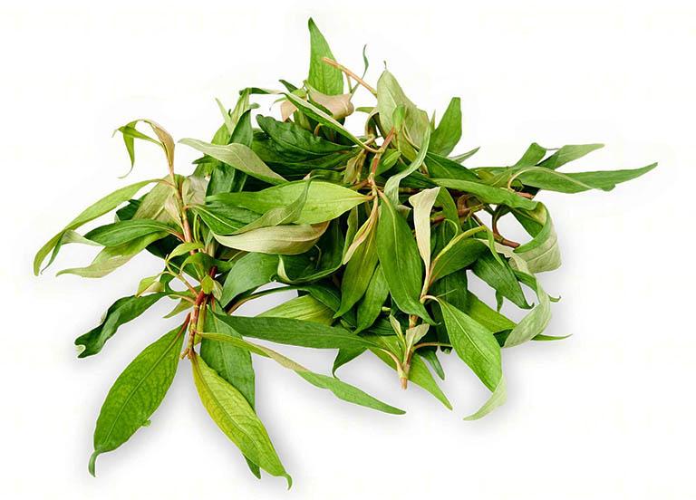 chữa bệnh tổ đỉa bằng muối và rau răm