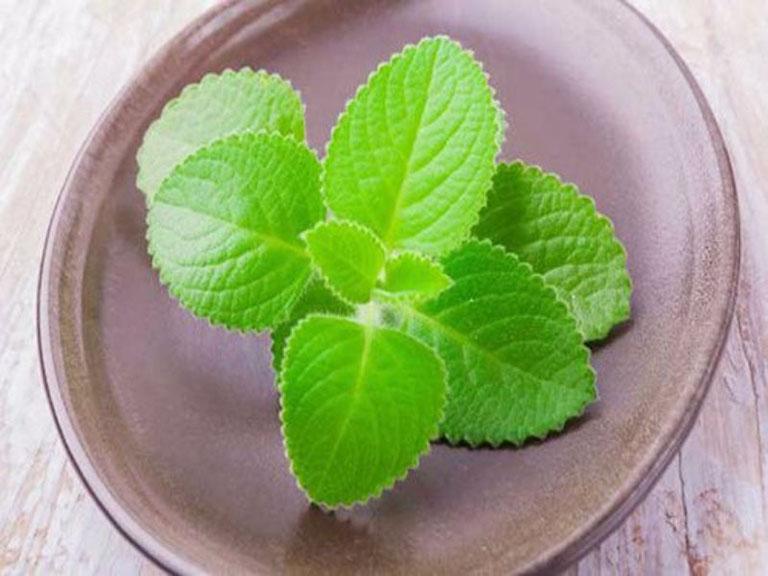 Lá húng chanh thường được sử dụng để chữa trị viêm amidan tại nhà