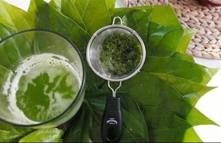 Uống nước lá lốt giúp hỗ trợ cải thiện các triệu chứng của bệnh tổ đỉa từ bên trong cơ thể