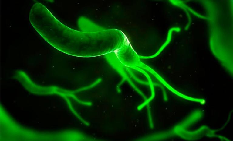 Nhiễm vi khuẩn Hp cũng là nguyên nhân dẫn đến tình trạng đau dạ dày thường gặp