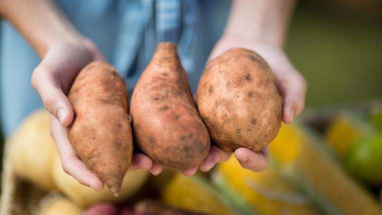 Người bệnh nên chọn mua và sử dụng khoai lang tươi, không bị mọc mầm xung quanh