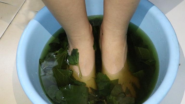 Ngâm chân bằng nước lá lốt khi ngủ giúp giảm đau và ngủ ngon giấc hơn
