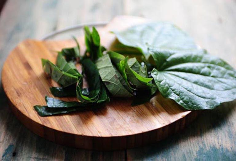 Dùng lá lốt để cải thiện các triệu chứng do bệnh thoái hóa khớp gối gây ra