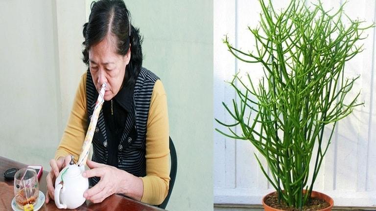 Nhựa giao tuy độc nhưng lại có công dụng chữa viêm mũi dị ứng hiệu quả