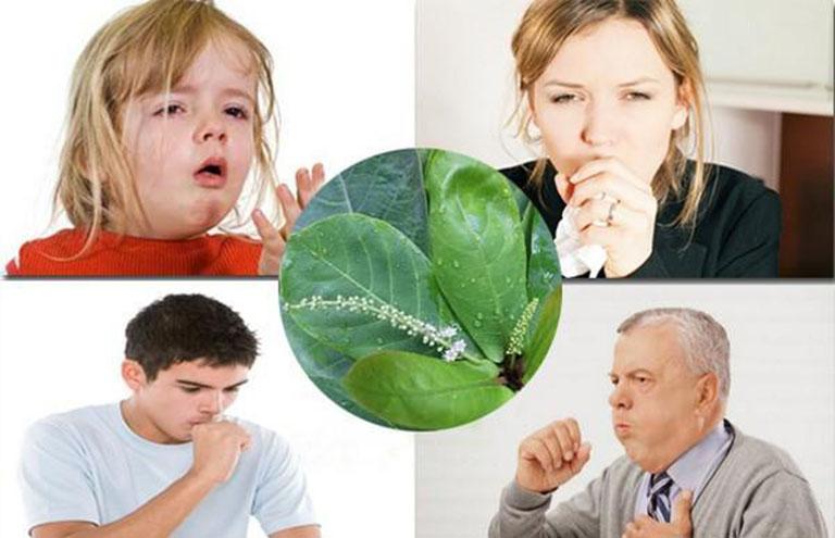 Lá bàng chữa viêm họng hiệu quả