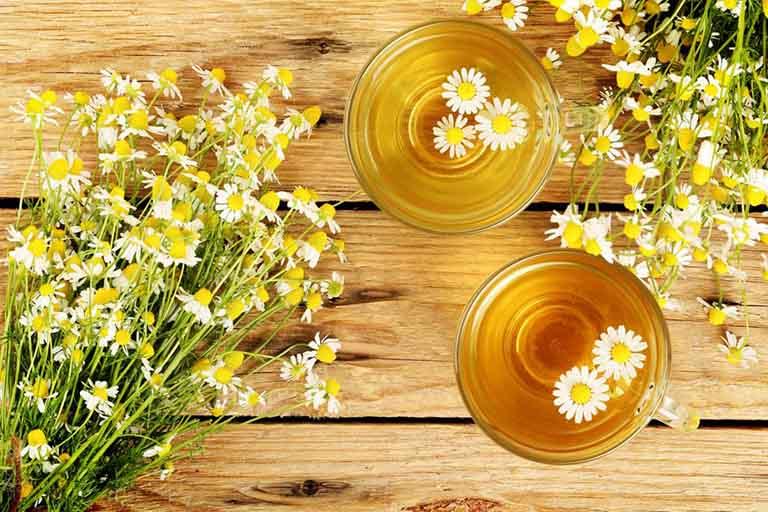 Uống trà hoa cúc ấm
