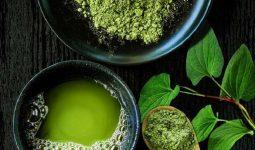 Sắc nước cốt rau diếp cá và cam thảo uống trị ho
