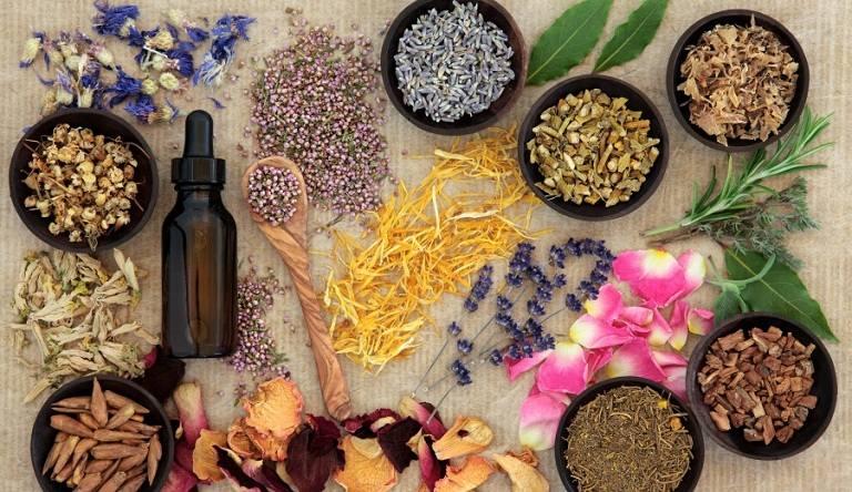 Thuốc nam là những cây thuốc thảo mộc được dùng trị bệnh theo kinh nghiệm dân gian