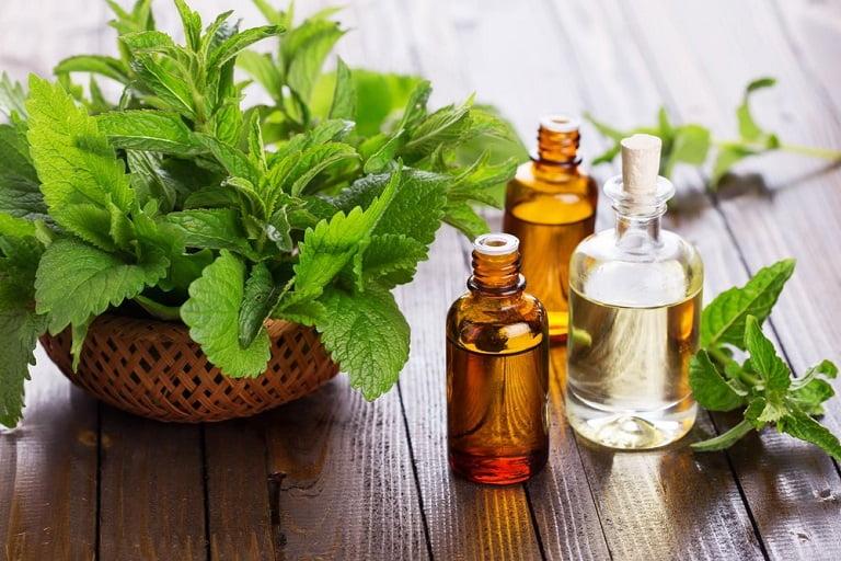 Các hoạt chất trong tinh dầu bạc hà có khả năng kháng khuẩn mạnh mẽ