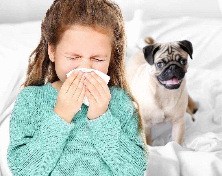 Trẻ bị dị ứng lông động vật cũng là tác nhân dẫn tới các triệu chứng khó chịu ở mũi họng