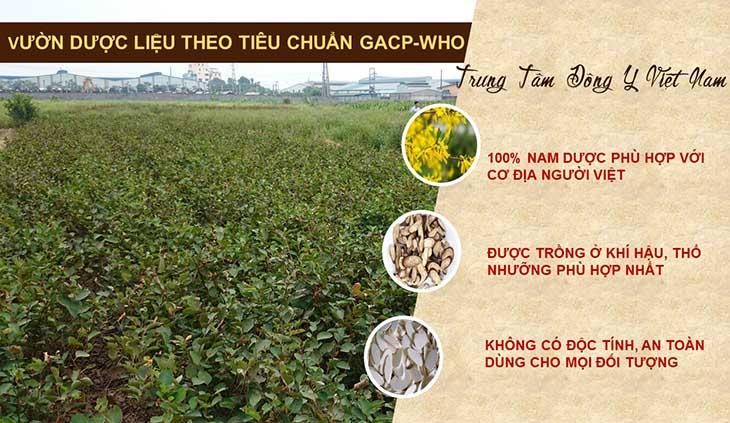 Vườn dược liệu cung cấp thảo dược cho Thanh hầu bổ phế thang