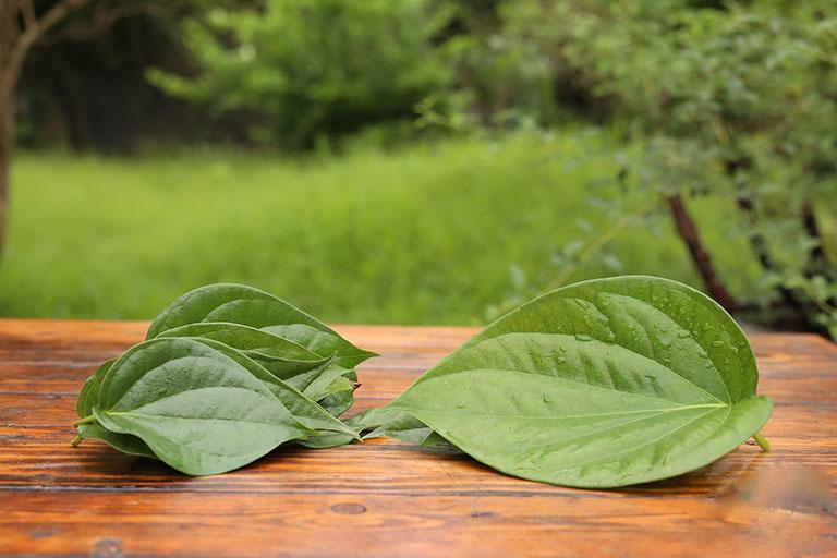 Công hiệu chữa bệnh da liễu của lá trầu không