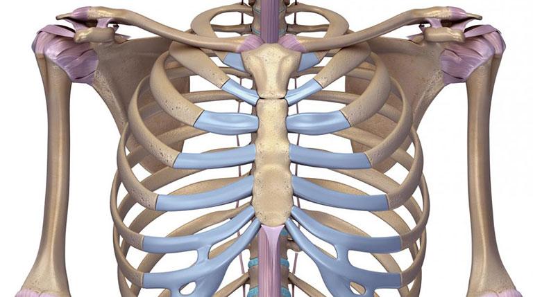 Đau xương ức (ngực) bên trái, phải