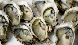 Dù ngon nhung vẫn nên hạn chế hải sản dòng nhuyễn thể hai mảnh để giảm dị ứng hải sản nhẹ