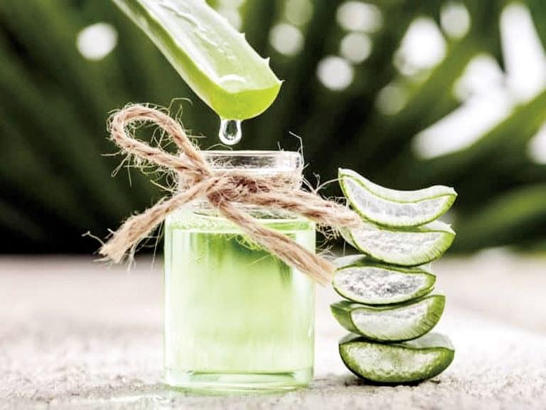 Nha đam chứa hơn 100 loại khoáng chất có thể chữa rụng tóc hiệu quả