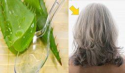 Nha đam trị rụng tóc, kích thích mọc tóc