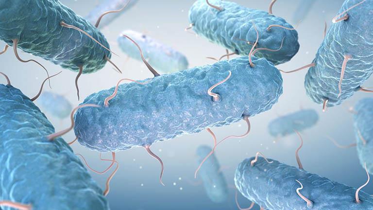 E. Coli là nguyên nhân chủ yếu gây ra nhiễm trùng đường tiết niệu