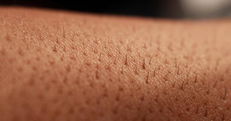 Lỗ chân lông/nang lông hay nang tóc là những túi nhỏ trong da, bao lấy chân lông hay tóc