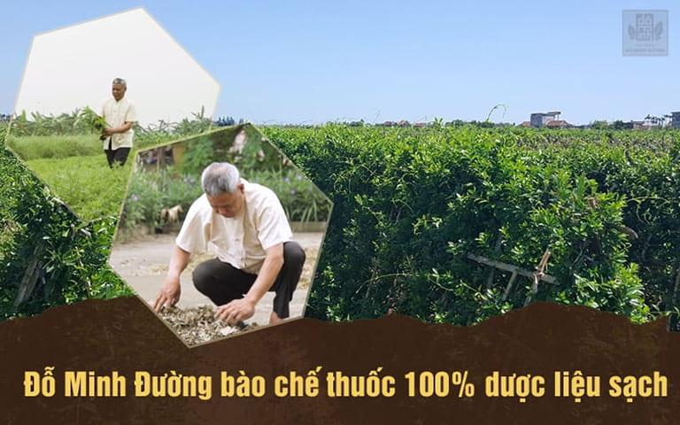 vườn dược liệu sạch nhà thuốc Đỗ Minh Đường