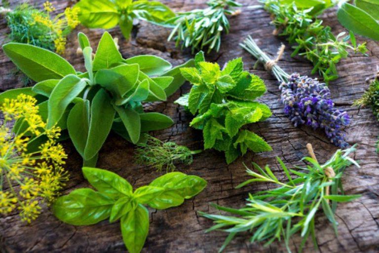 Dùng thảo dược tự nhiên để cải thiện tình trạng bệnh theo các mẹo lưu truyền trong dân gian