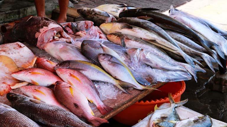 Ăn các loại cá biển khi bị rong kinh
