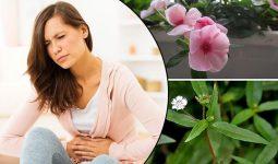 10+ Cách trị rong kinh tại nhà an toàn và hiệu quả