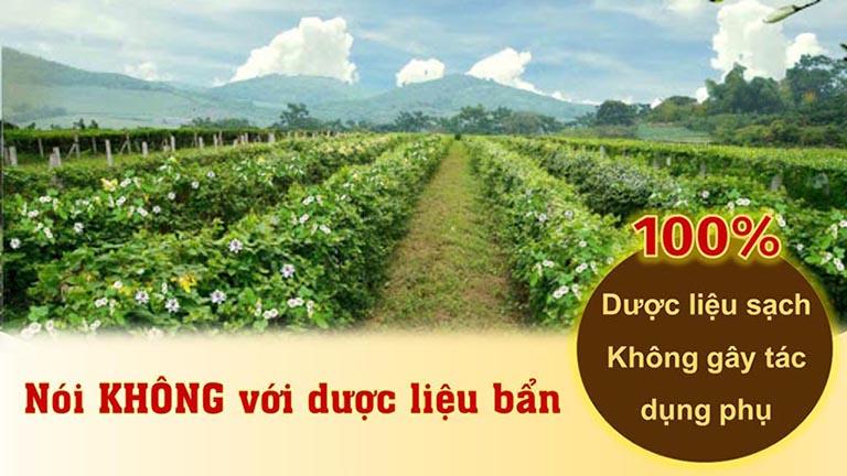 Bài thuốc trị viêm họng của Đông y Việt Nam sử dụng nguồn thảo dược sạch, đạt tiêu chuẩn GACP - WHO