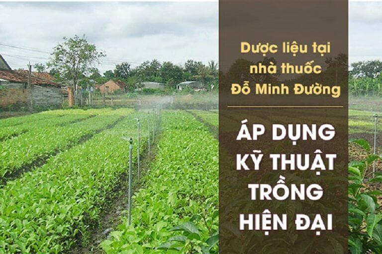 Vườn trồng thảo dược làm nên thành công của bài thuốc Đỗ Minh Đường