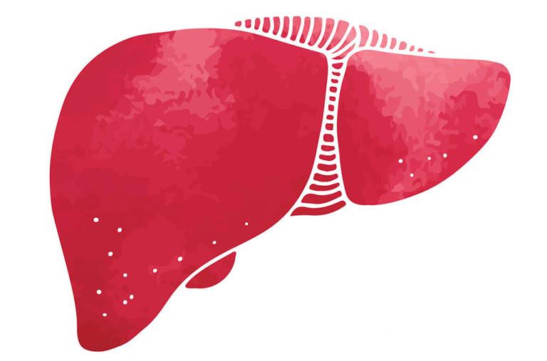 Gan được bao phủ và bảo vệ bởi một lớp màng kép, tương đối mỏng, có tên gọi là phúc mạc