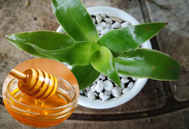 dùng cây lược vàng chữa viêm nha chu